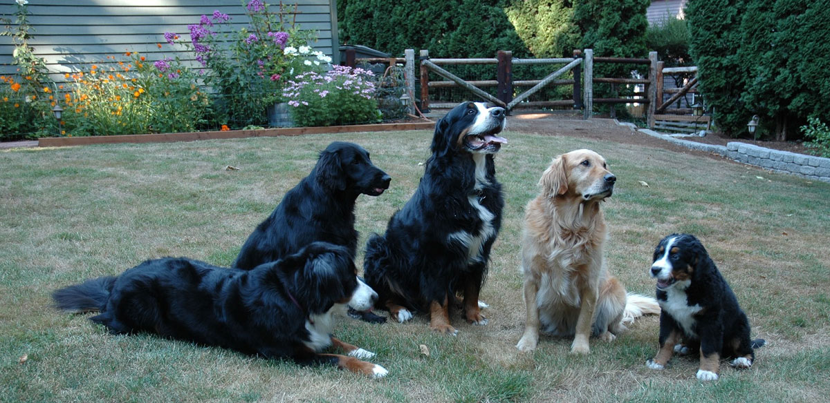 UK holiday lets for several dogs