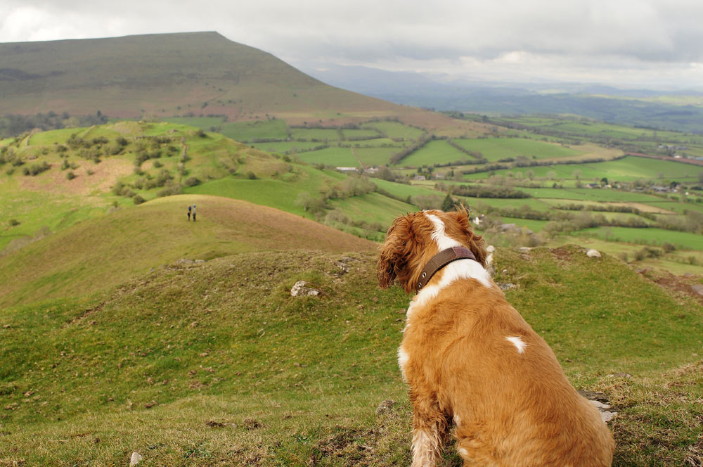 dogs friendly Brecon Beacons