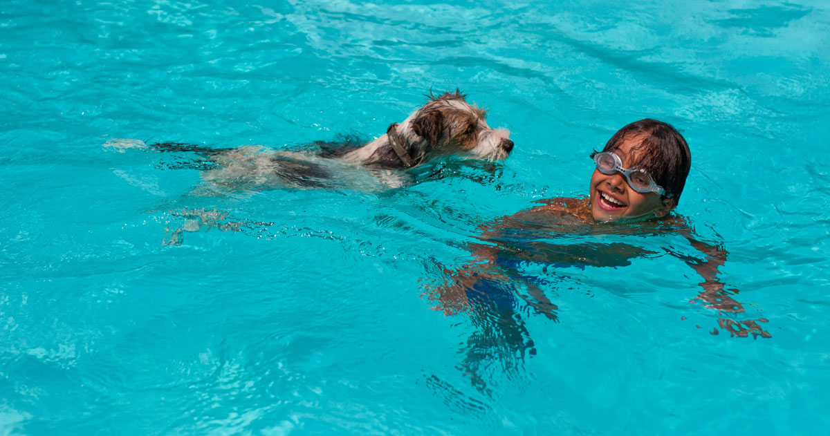 Pet Friendly Holiday Lets In Britain That Have A Swimming Pool