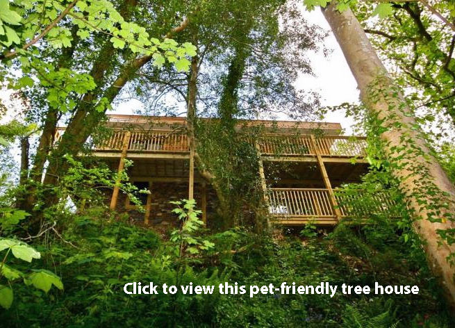 dog friendly tree house holiday home in Devon